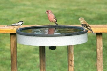 best solar powered bird bath heater