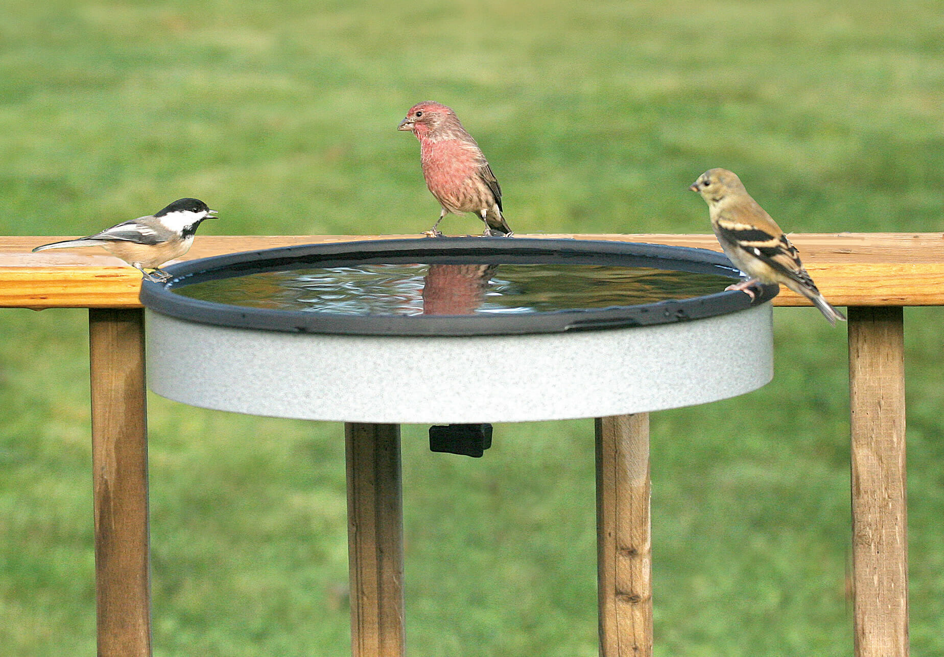 best solar powered bird bath heater