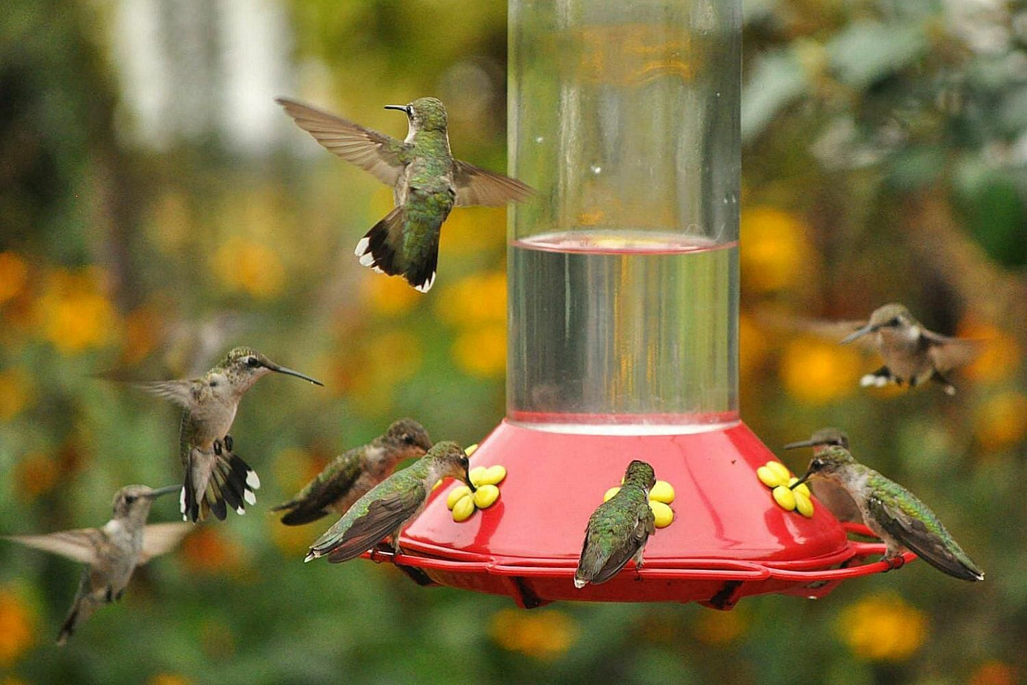 hummingbird feeder reviews