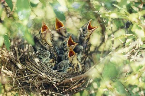 why do mother birds abandon their babies