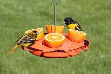 best oriole feeder