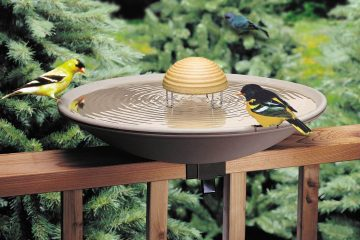 how to get birds to use a bird bath