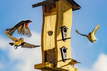 how do birds find feeders
