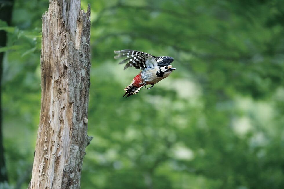 how to attract woodpeckers to your yard