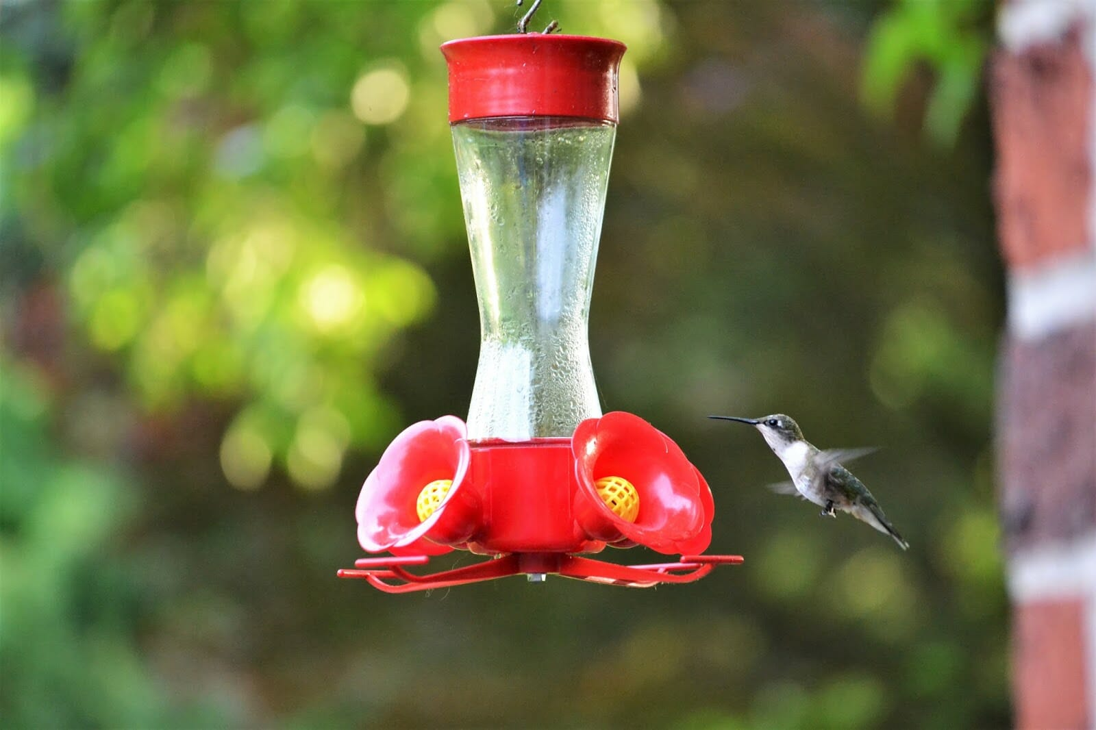 Our Guide To Making Hummingbird Nectar Recipe Included Birdwatching Buzz