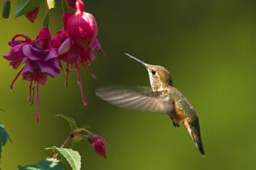what time of day do hummingbirds feed