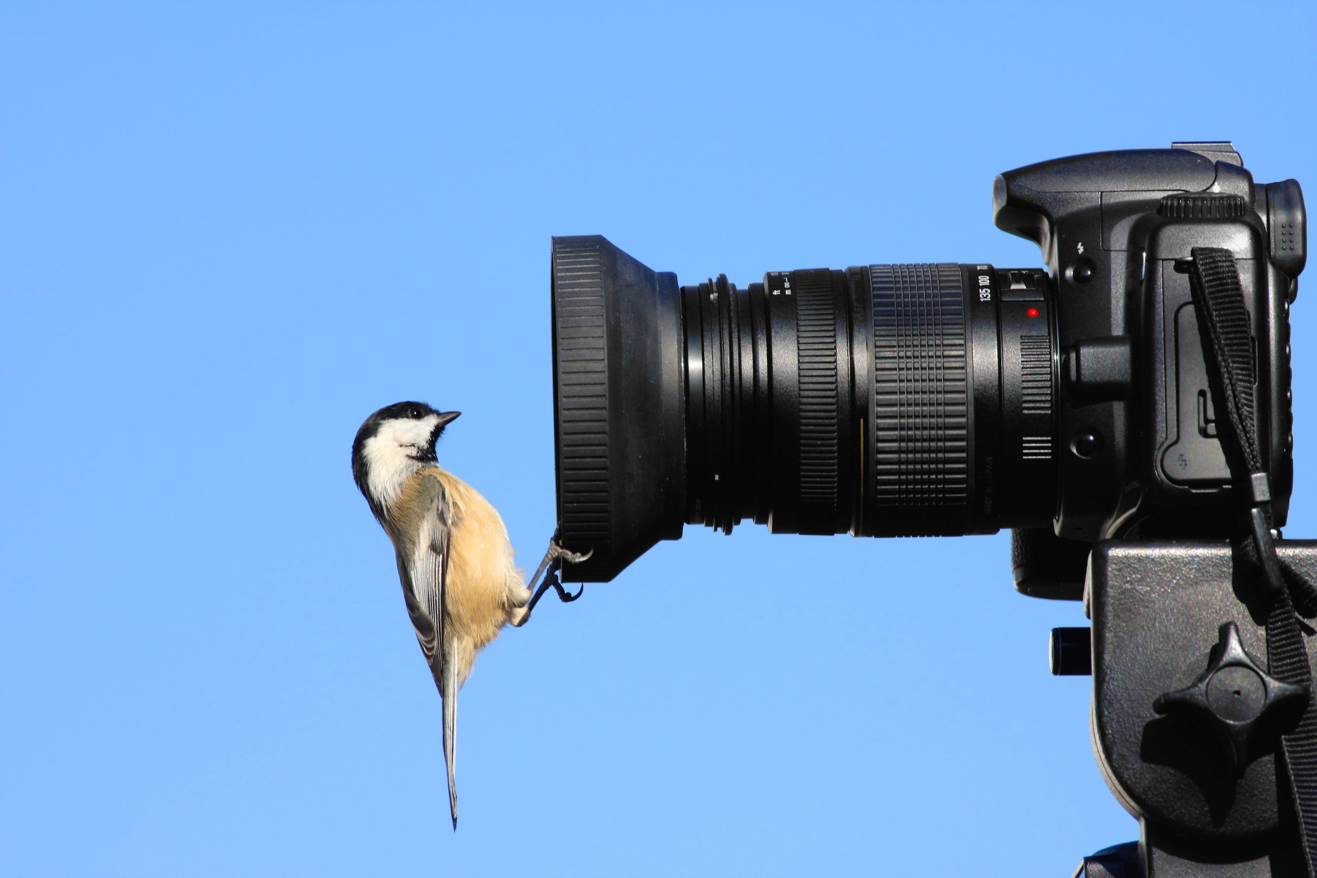 best budget lens for bird photography