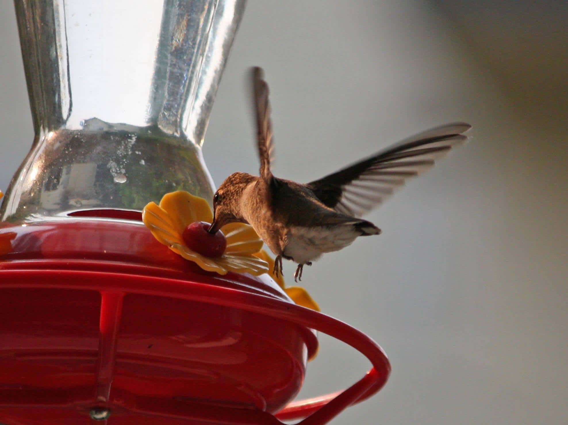 best way to clean a hummingbird feeder