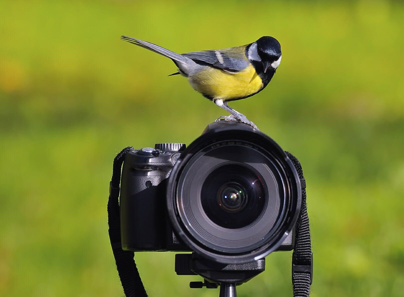 bird on camera