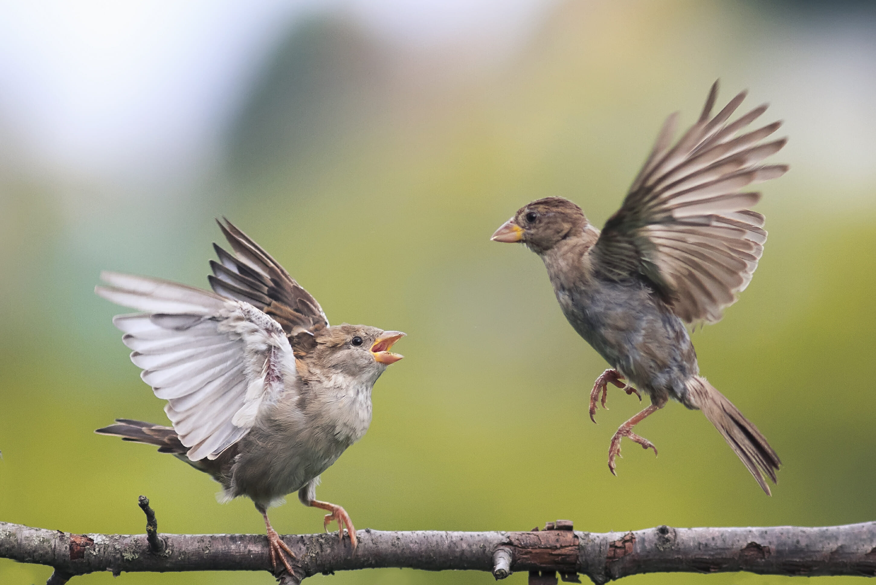 two birds fighting evil on a branch