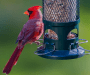 7 Best Bird Feeders for Cardinals [2019 Reviews & Guide]