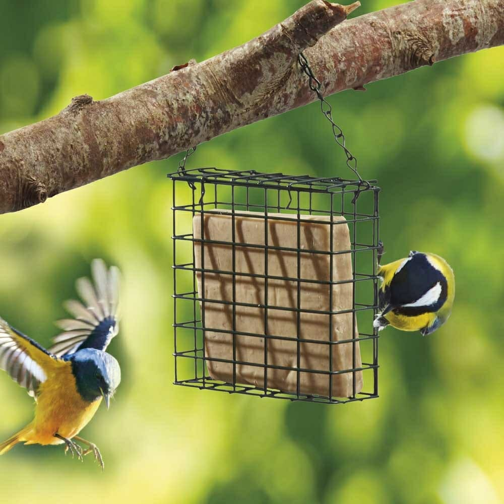best suet cakes for birds