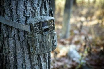 best trail camera for home security