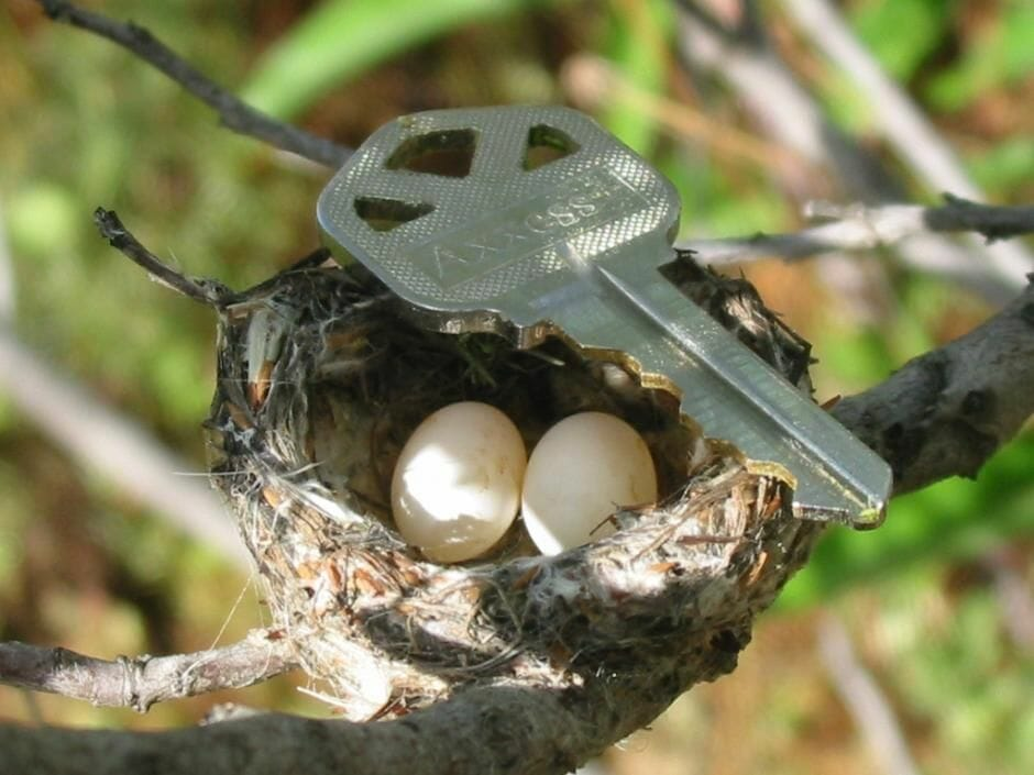 hummingbird eggs small