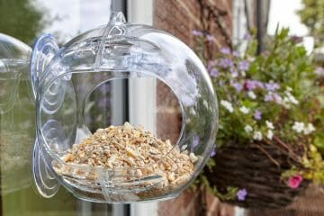best bird feeder for apartments