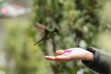 do hummingbirds recognize humans