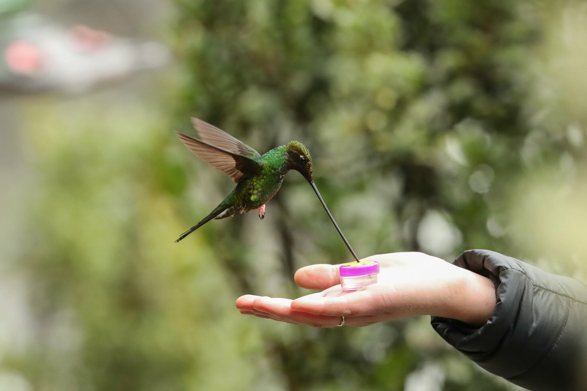 do hummingbirds recognize humans