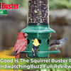 squirrel buster plus review