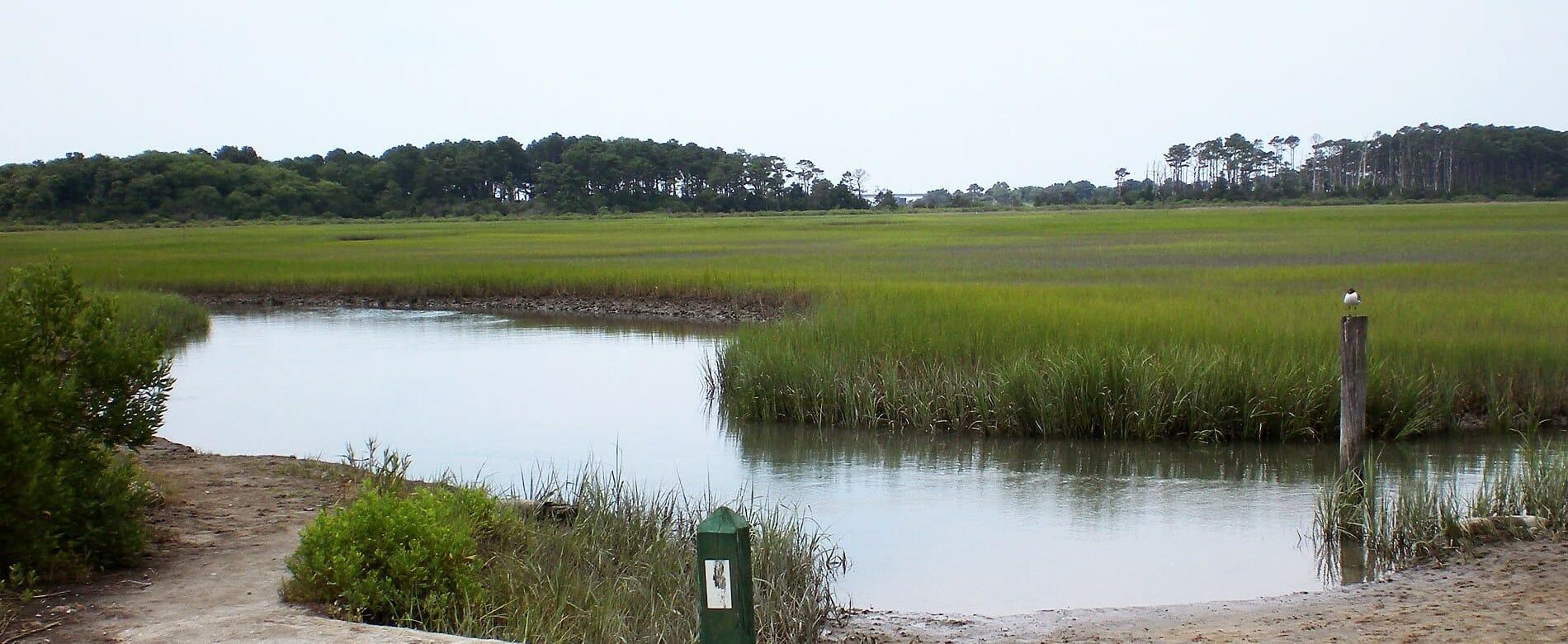 eastern shore national wildlife refuge