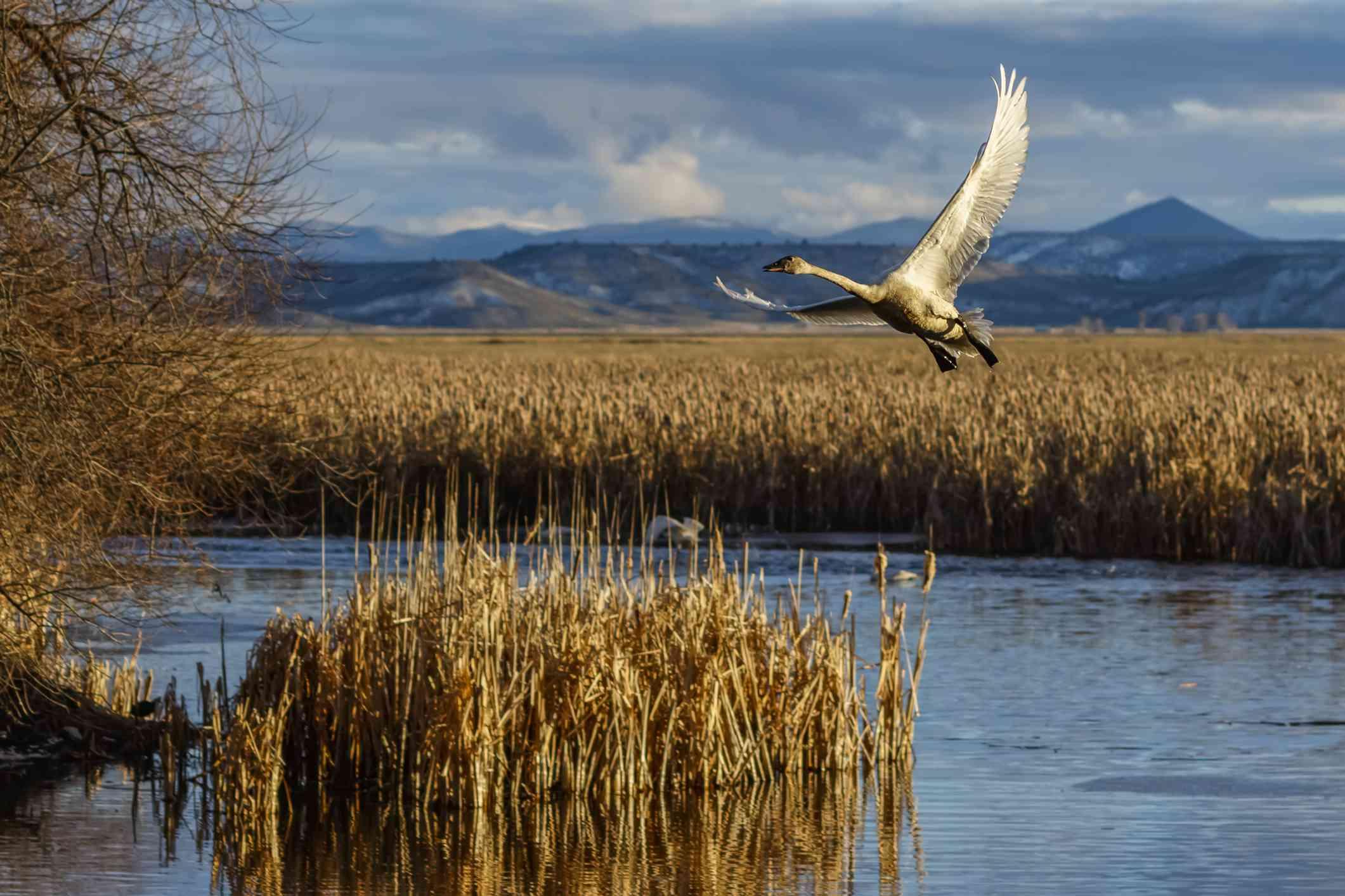 klamath basin birding trail