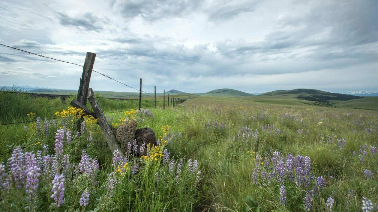 zumwalt prairie preserve