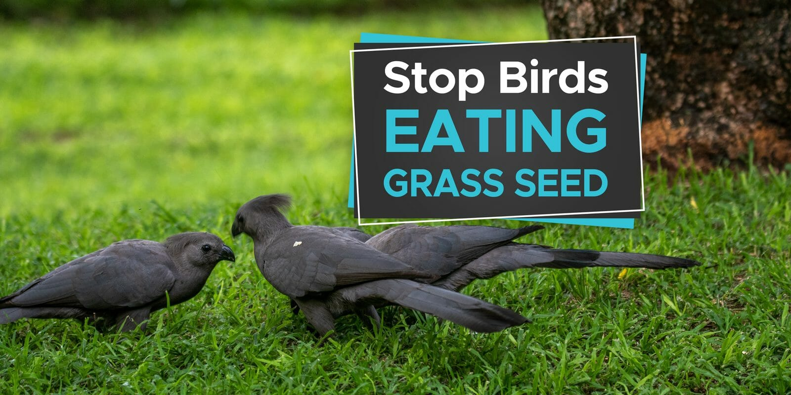 how to stop birds eating grass seed