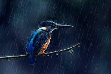 do birds fly in the rain
