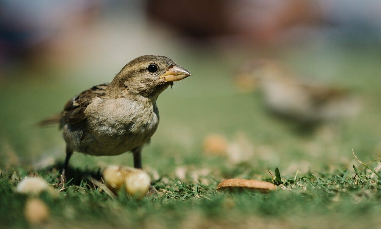 how to keep birds from eating your grass seed