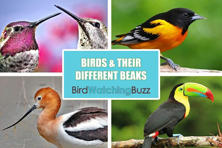 birds different beaks