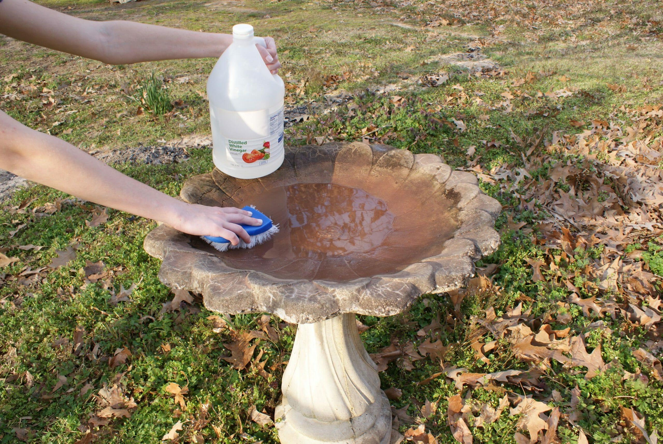 how do you get rid of algae in a bird bath