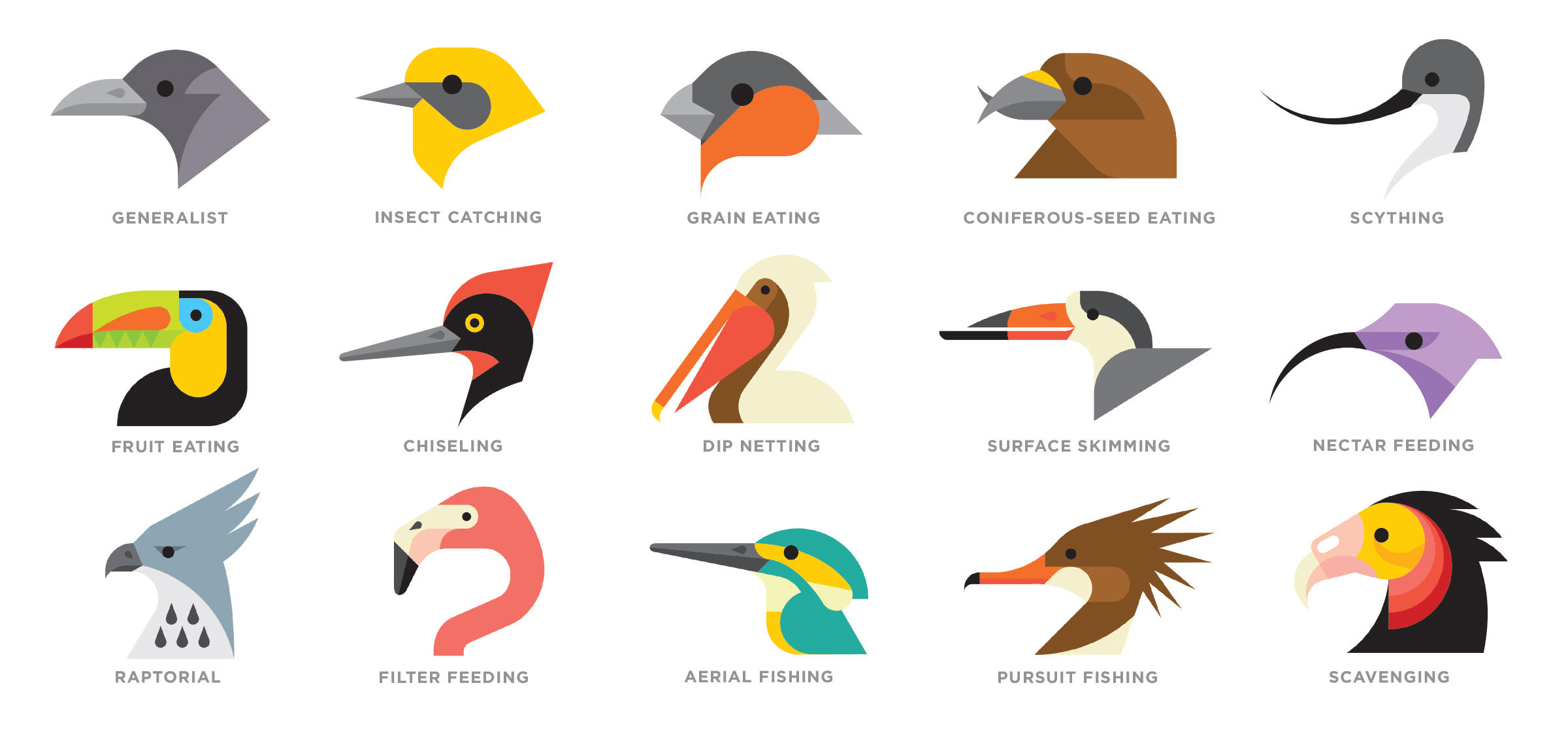 what are the different types of bird beaks