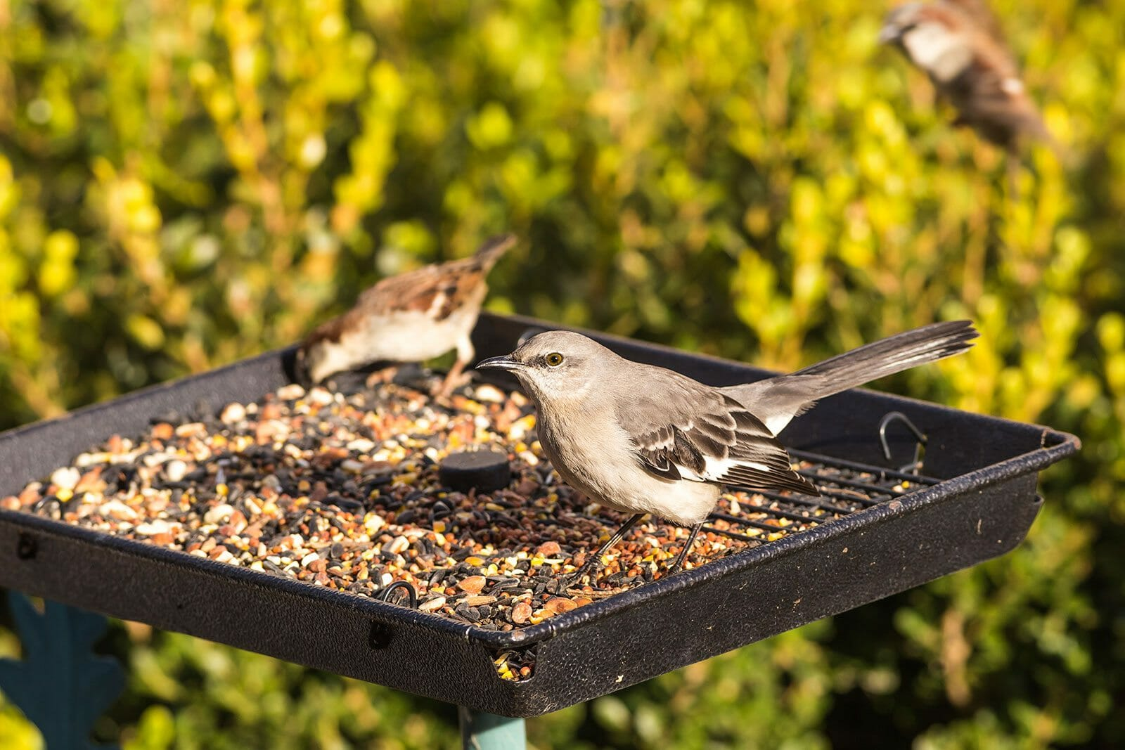 why do birds throw seed out of feeder