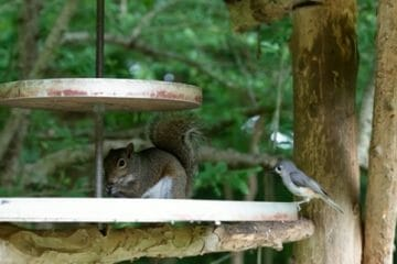 how to keep chipmunks out of your bird feeder