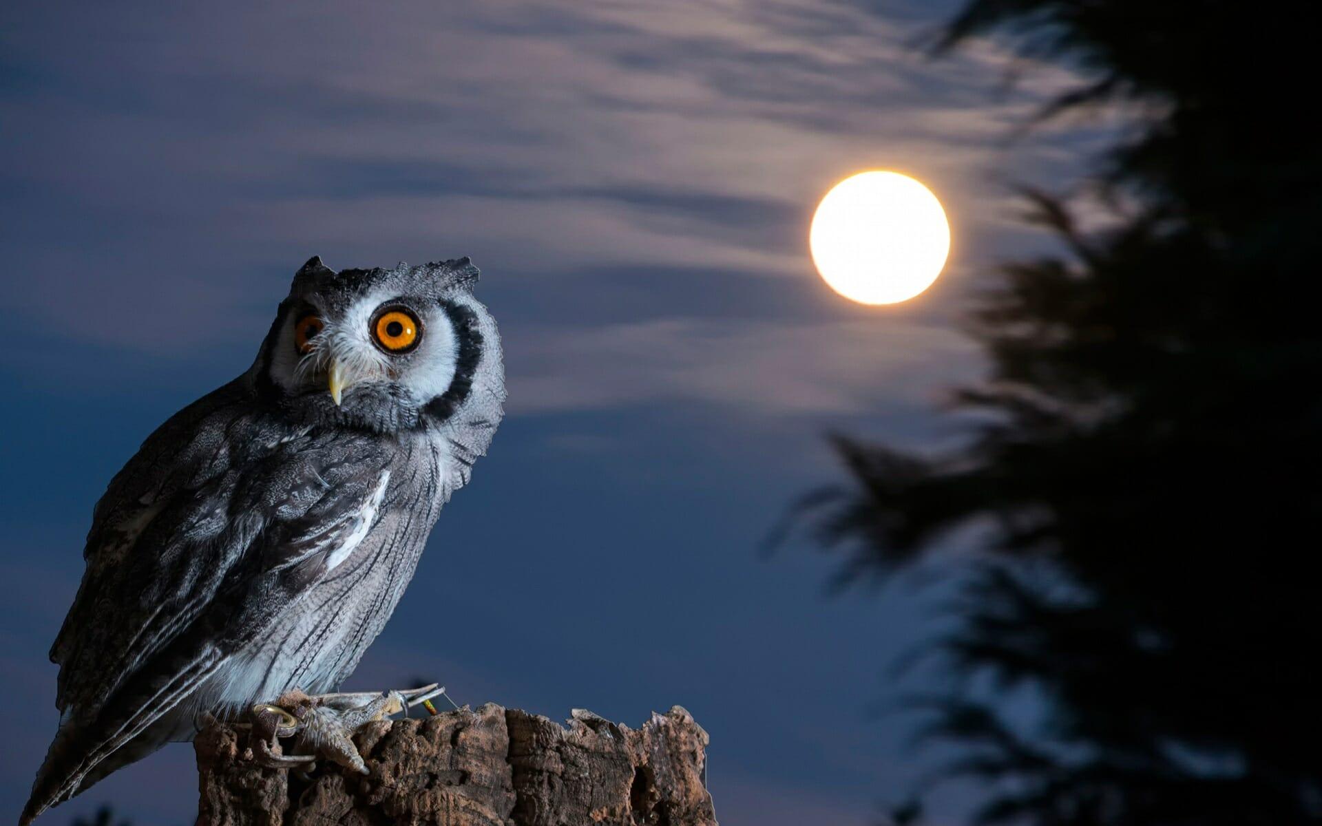 where do birds go at night