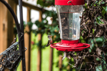 best bird feeder camera