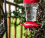 Best Bird Feeder Camera [Our 5 Recommendations for 2021]