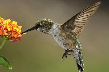 do hummingbirds have feet