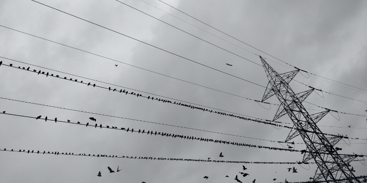 why do birds sit on power lines