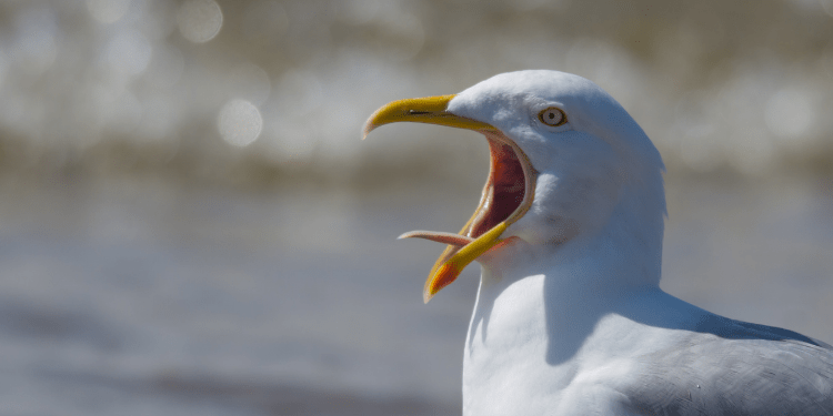 do birds have tongues