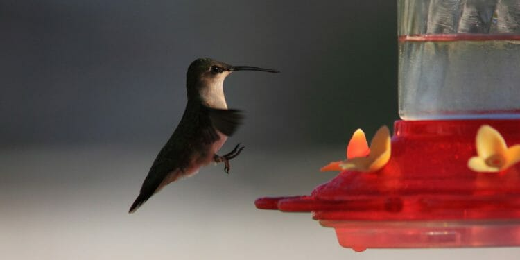 do hummingbirds land