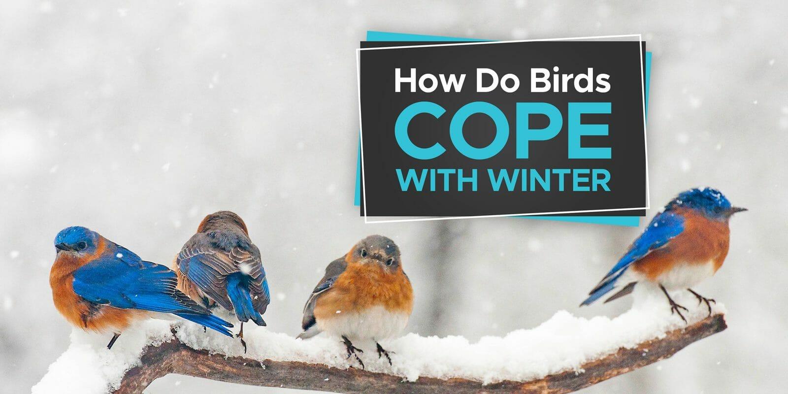 do birds get cold