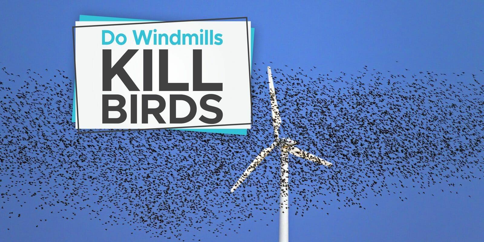 do windmills kill birds