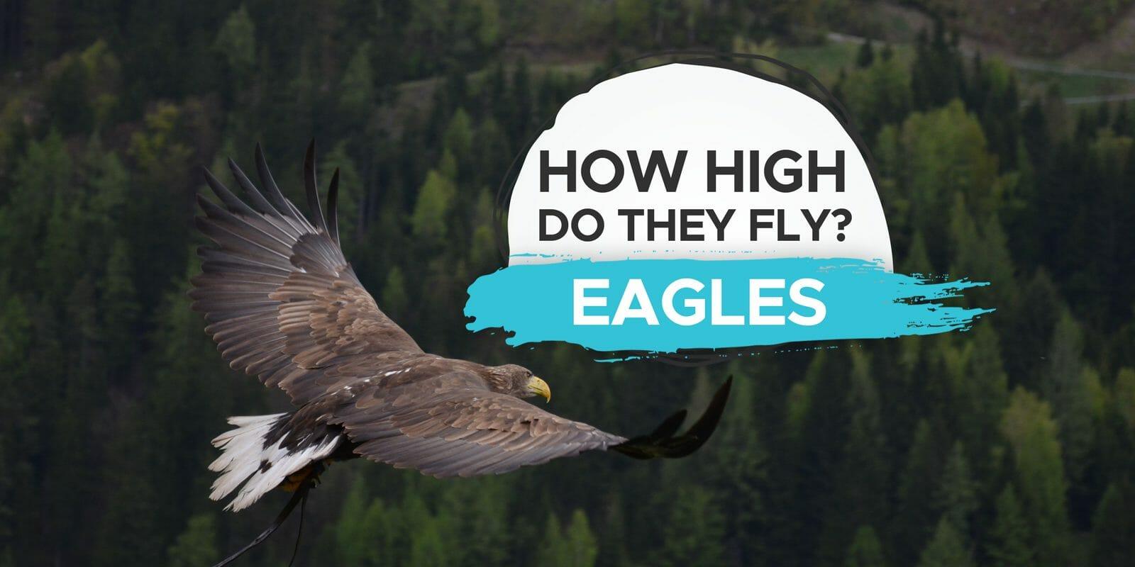 how high do eagles fly