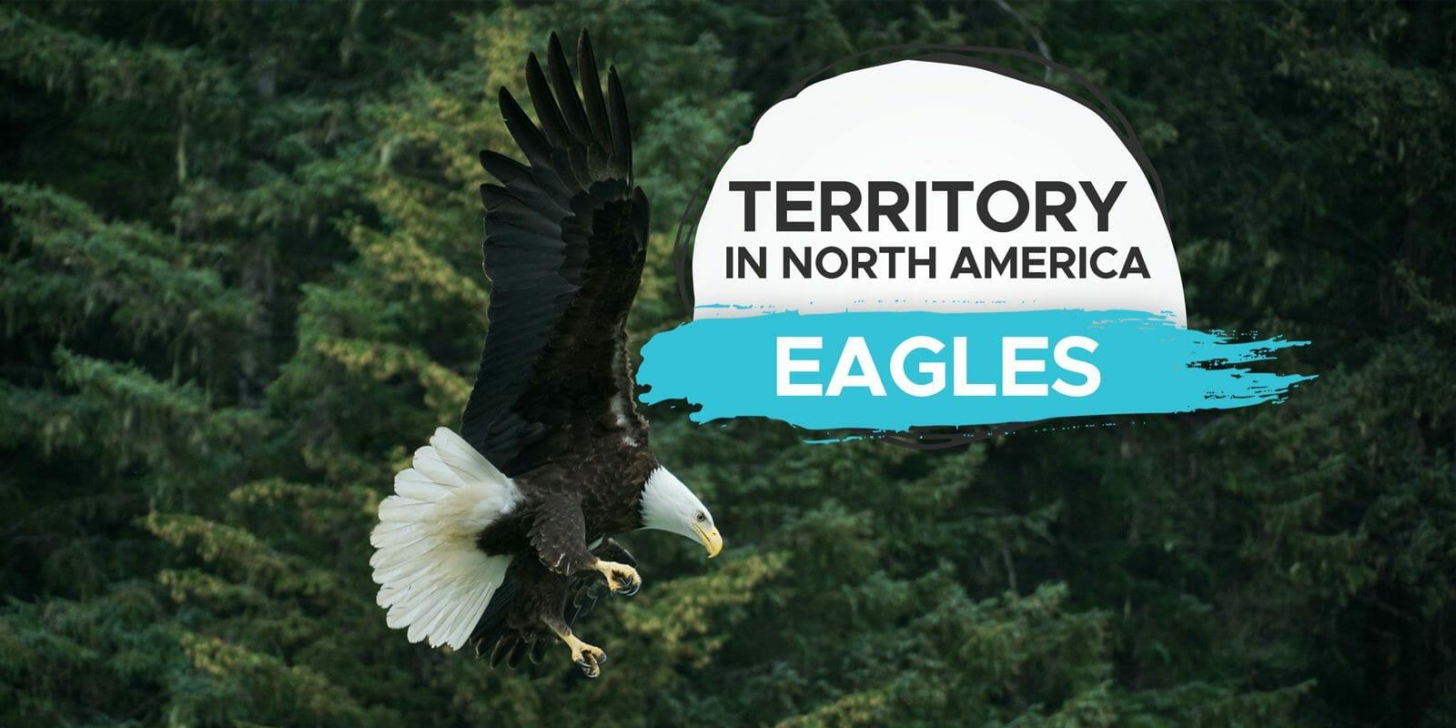 where do bald eagles live
